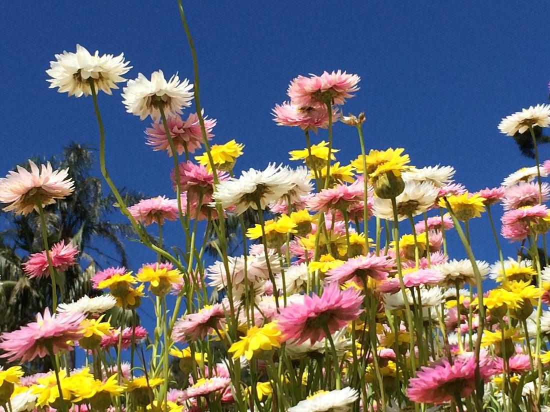 royal-botanic-gardens-sydney